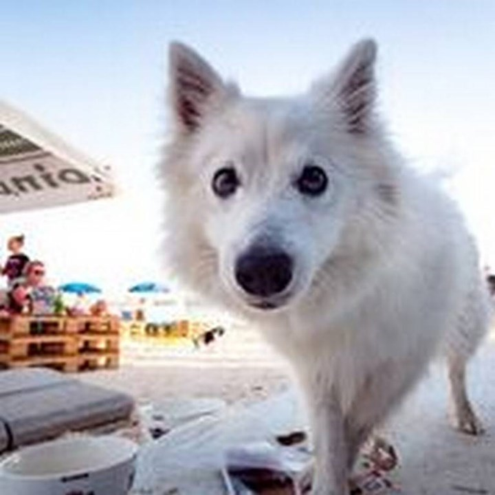 Monty's Dog Beach & Bar -Hundestrand 18
